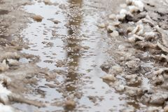 Puddles from the rain in winter. In the park in nature Royalty Free Stock Photo