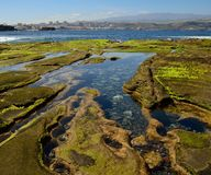 Puddles on the reef and city. Puddles of sea water at low tide and city, The confital, Las palmas of Gran canaria Royalty Free Stock Photography