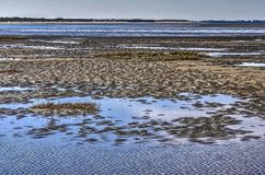 Puddles on a sandy beach. Shallow puddles and low vegetation on a sandy and muddy beach on the Northsea coast near Oostvoorne, The Netherlands Stock Photos