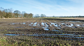 Puddles and tractor tracks in Belgian farmland Stock Photo