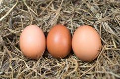 pudełko łamający kurczaka jajka wśrodku yolk zdjęcia royalty free