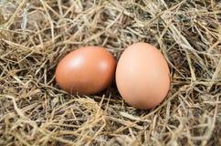pudełko łamający kurczaka jajka wśrodku yolk obrazy stock