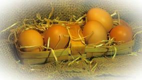 pudełko łamający kurczaka jajka wśrodku yolk Fotografia Stock