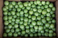 Pudełko Greengage śliwek owoc dla sprzedaży w warzywo sklepie zdjęcia stock