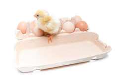 Pudełko z jajkami i kurczakiem troszkę Zdjęcie Stock