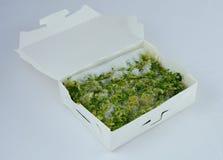 Pudełko zamarznięci brokuły Obraz Royalty Free