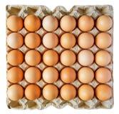 pudełkowaci jajka zdjęcie royalty free