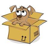pudełkowaty ładny szczeniak Zdjęcia Royalty Free