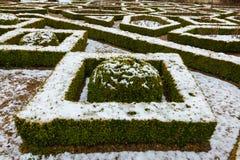 Pudełkowaty żywopłot z chrupiącym śniegiem Fotografia Royalty Free
