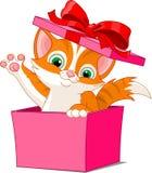 pudełkowaty kot ilustracji