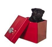 pudełkowaty psi prezent fotografia stock