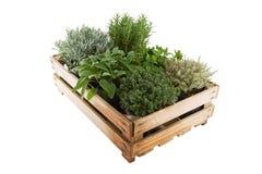 Pudełko z ziele Fotografia Stock