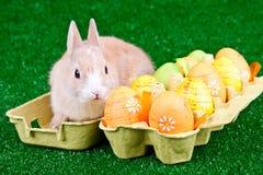 pudełkowaci królika Easter jajka Zdjęcia Royalty Free