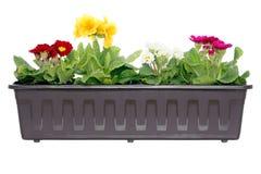 pudełkowatych klasycznych kwiatów stylowy okno Zdjęcie Royalty Free