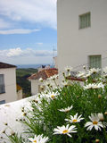 pueblo ισπανικά λουλουδιών blanco Ανδαλουσίας στοκ φωτογραφία