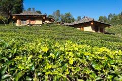 Pueblo chino en el maehongson del jardín de té verde, Tailandia Foto de archivo