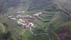 Pueblo con la plantación de té en área de montañas de Alishan, Taiwán Silueta del hombre de negocios Cowering almacen de video