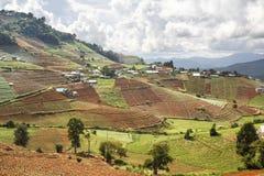 Pueblo de la tribu de la colina de Hmong y campo vegetal colgante Foto de archivo