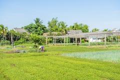 Pueblo de Tra Que, provincia de Quang Nam, Vietnam Fotografía de archivo
