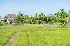 Pueblo de Tra Que, provincia de Quang Nam, Vietnam Imagenes de archivo