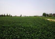 Pueblo del sur chino y campo verde del arroz imagen de archivo