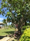 Pueblo en Fiji imágenes de archivo libres de regalías