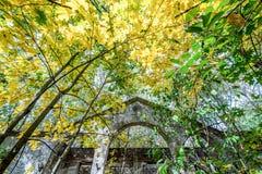 Pueblo en la zona de Chernóbil Imagen de archivo