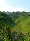 Pueblo en los campos del arroz Imagenes de archivo