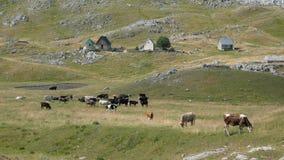 Pueblo en Montenegro foto de archivo libre de regalías