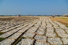 Pueblo pesquero vietnamita secado Vietnam de los pescados imagen de archivo