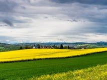 Pueblo suizo rodeado por los campos amarillos Imagen de archivo libre de regalías