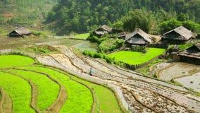 Pueblos de Akha en Sapa, Vietnam, terraza magnífica del arroz almacen de metraje de vídeo