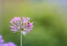 A puede escarabajo que se sienta en un arco decorativo de la flor Imagenes de archivo