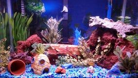Puede usted encontrar los pescados en el acuario Fotos de archivo