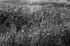Puente blanco y negro Imagen de archivo