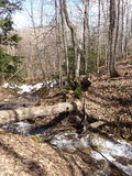 Puente caido del árbol Imagen de archivo