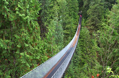 Puente colgante en bosque Imagen de archivo