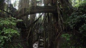 Puente con las figuras de dragones en el mono Forest Bali Indonesia de Ubud de la selva almacen de metraje de vídeo