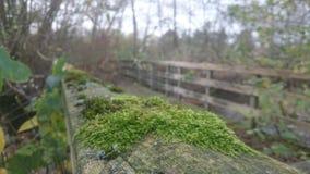 Puente cubierto de musgo Foto de archivo libre de regalías