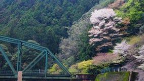 Puente de acero y árbol colorido en la montaña Imagen de archivo libre de regalías
