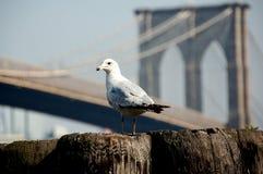 Puente de Brooklyn en NYC Imagenes de archivo
