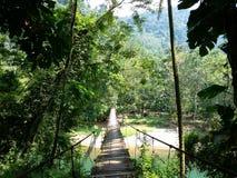 Puente de cuerda en Tabasco Fotografía de archivo libre de regalías