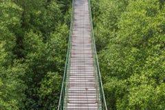 Puente de cuerda hecho de la madera sobre el bosque Imagen de archivo libre de regalías