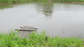 Puente de la lluvia de los pescados de la charca almacen de video