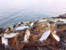 Puente de la pesca Imagen de archivo