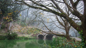 Puente de la piedra del lago stow y árboles muertos en el parque de Golden State, San Francisco en una mañana de niebla del invie Imágenes de archivo libres de regalías