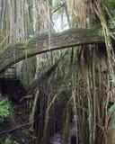 Puente de la serpiente en el bosque sagrado del mono en Bali Indonesia fotografía de archivo libre de regalías