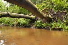 Puente de los troncos de árbol Fotografía de archivo libre de regalías