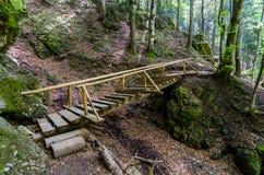 Puente de madera con las escaleras en bosque Foto de archivo libre de regalías