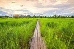 Puente de madera de 100 años entre el campo del arroz con luz del sol en N Imagenes de archivo